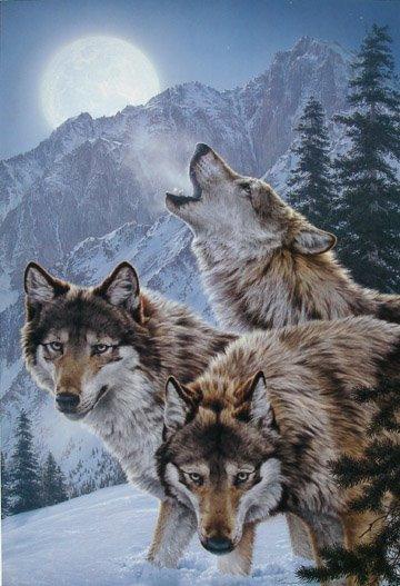 Wolf Paintings N005