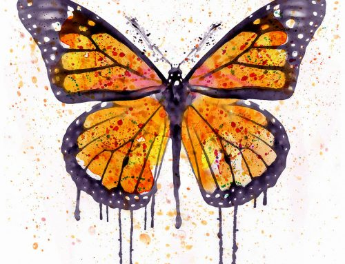 Why Girls Choose Butterfly Paintings for Their Room?